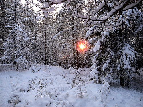 Sol i skog