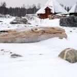 Trämonstret i snön