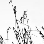 Zen grass